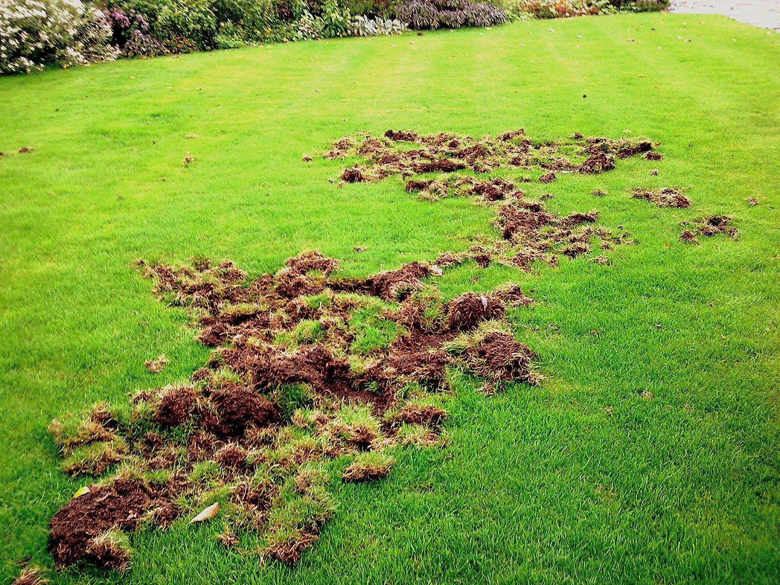 Just Lawns Lawn Care Amp Treatment King S Lynn Norfolk